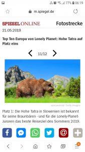 Ein Bär in der Hohen Tatra in Slowenien